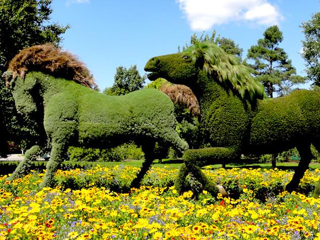 Gli 8 punti essenziali per creare un giardino a regola d'arte